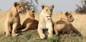 САФАРИ В КЕНИЯ- Приключения в сърцето на Африка